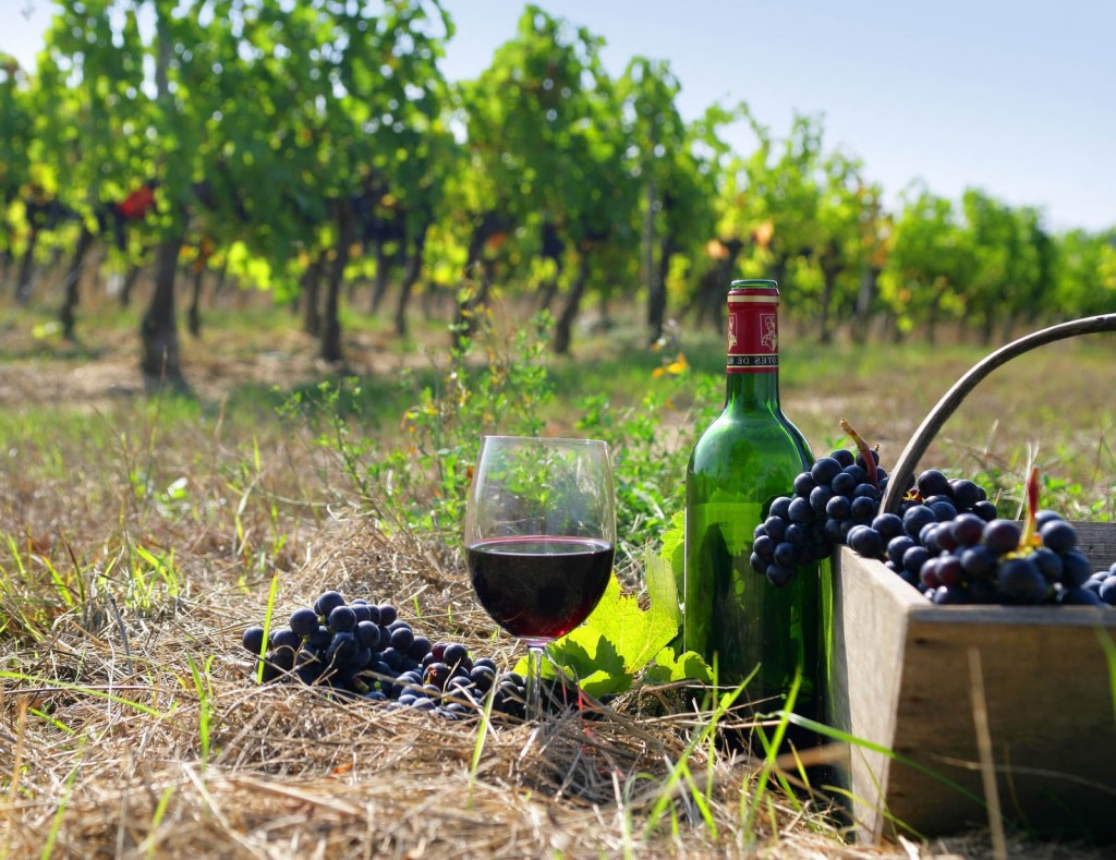 wine/винен тур/vins bulgares