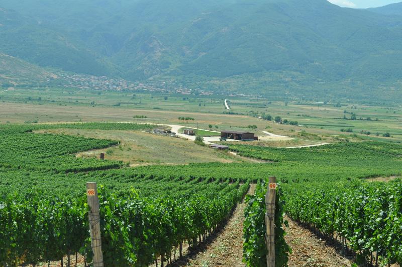 Balkan Baltic tour - wine tour offer - cave Yustina (2)